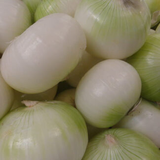 cebolla blanca kipula zuria biozaki