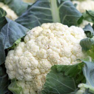 coliflor verduras biozaki comprar