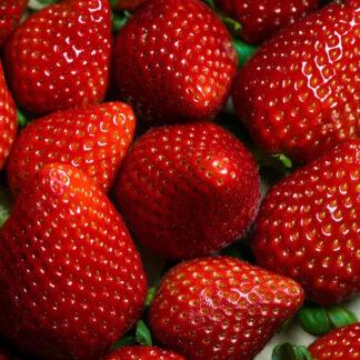 fresas biozaki