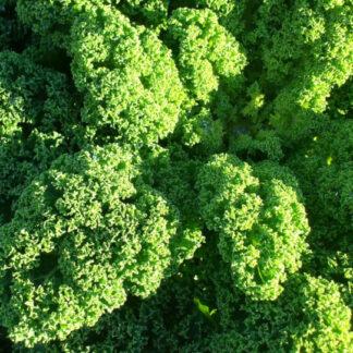 Kale biozaki comprar