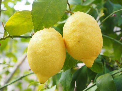 limones biozaki limoiak