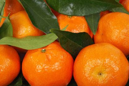 mandarina biozaki
