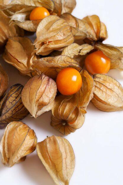 physalus fruta biozaki
